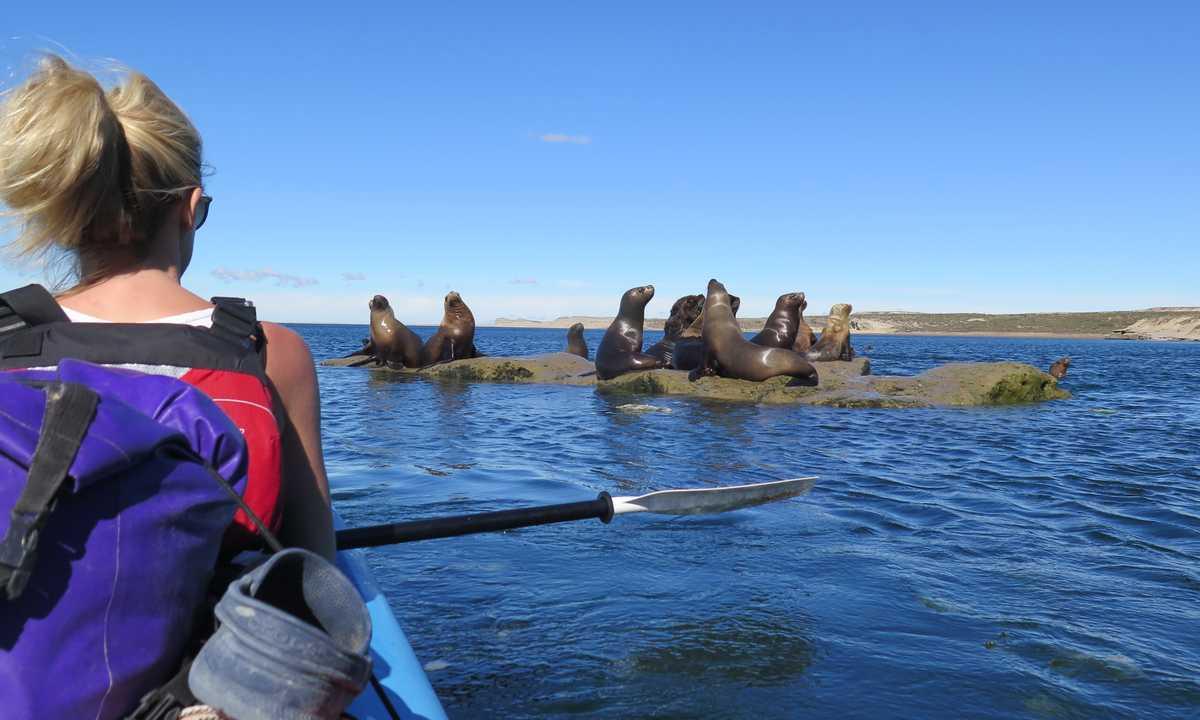 SWO_5_All_ Chloe_valdes_sea-lions-kayak