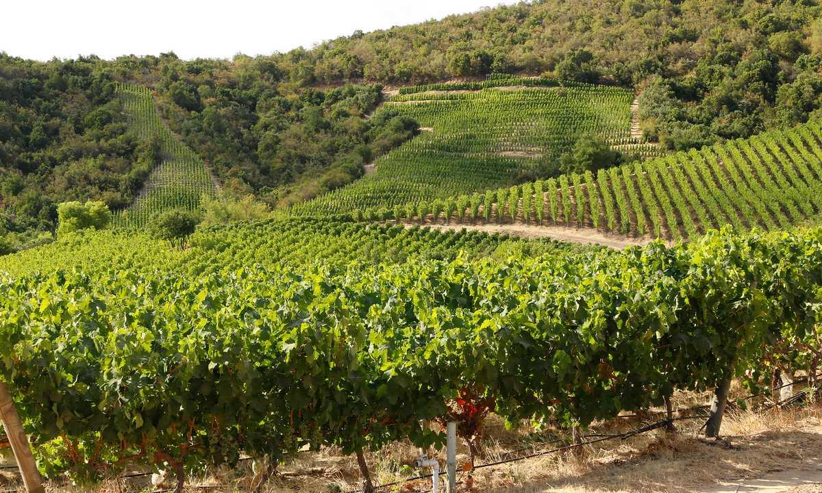 Colchagua Wine Tour