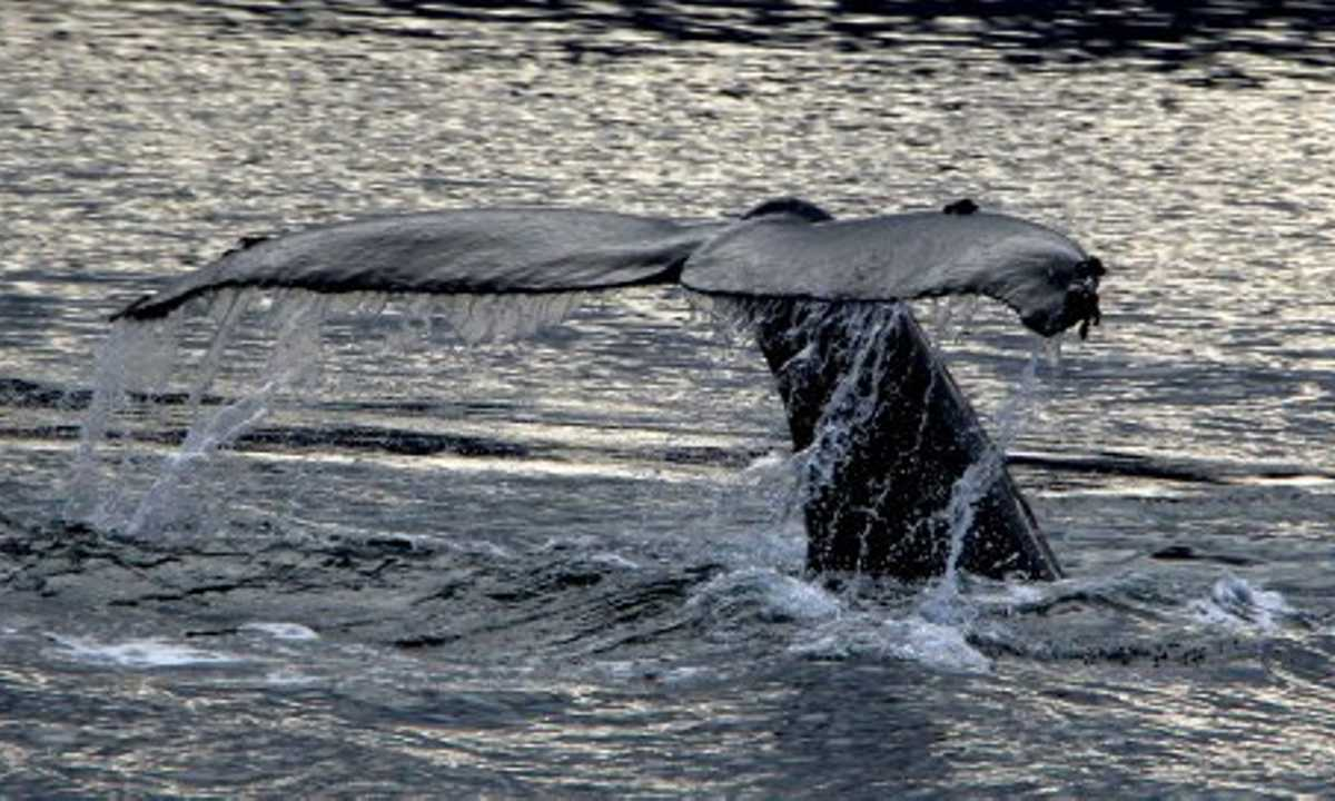 CN Whale Tail