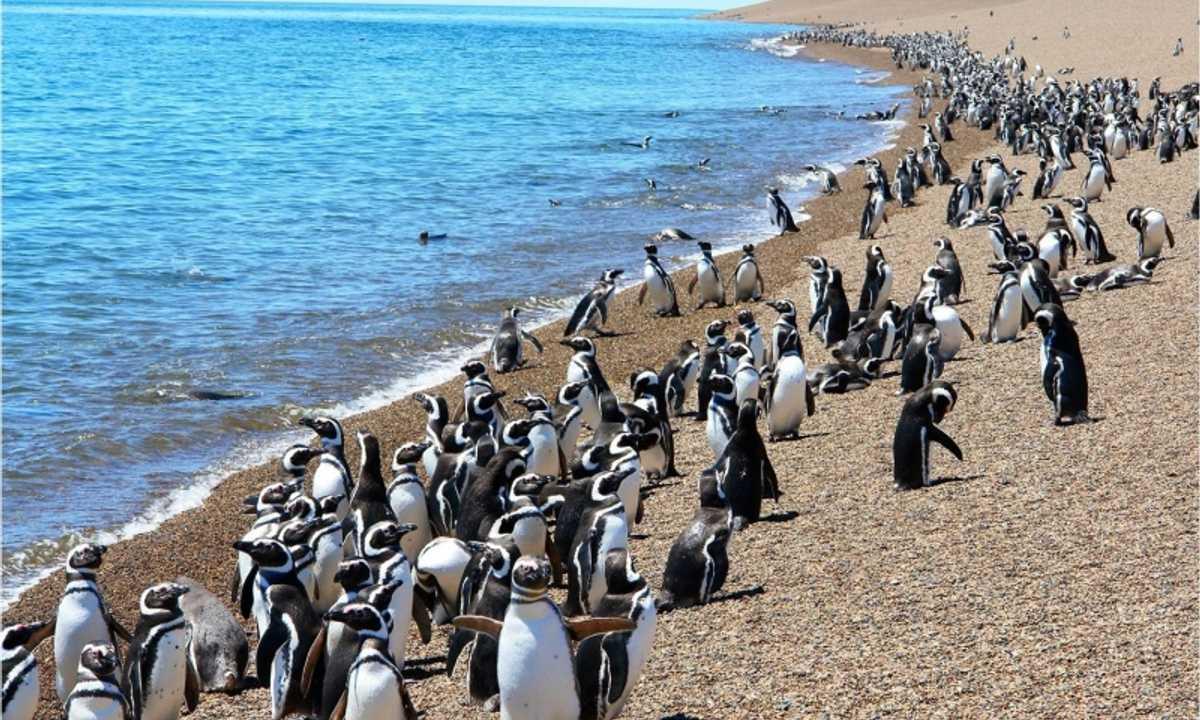 PenguinsOnBeachValdes-HT