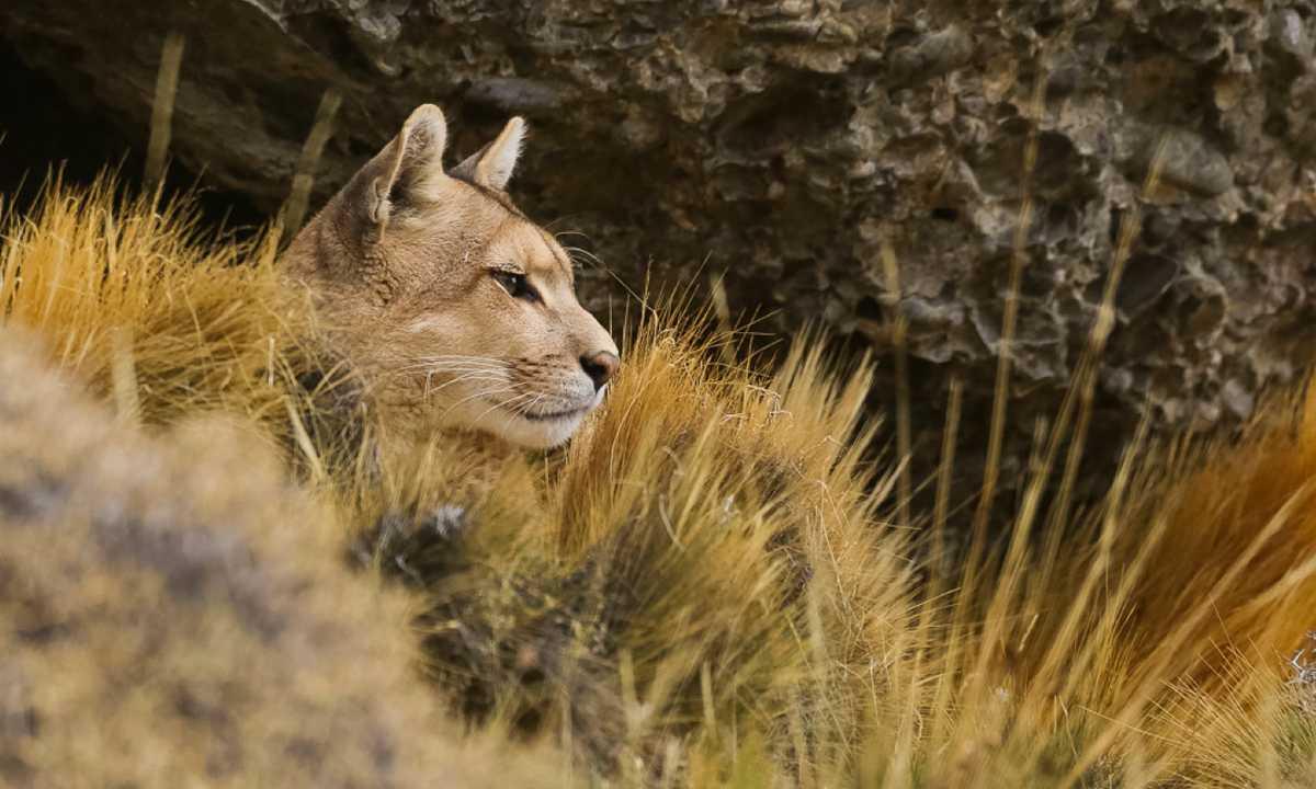 Pumas4 FSE
