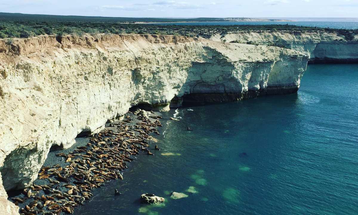Valdes seals cliff