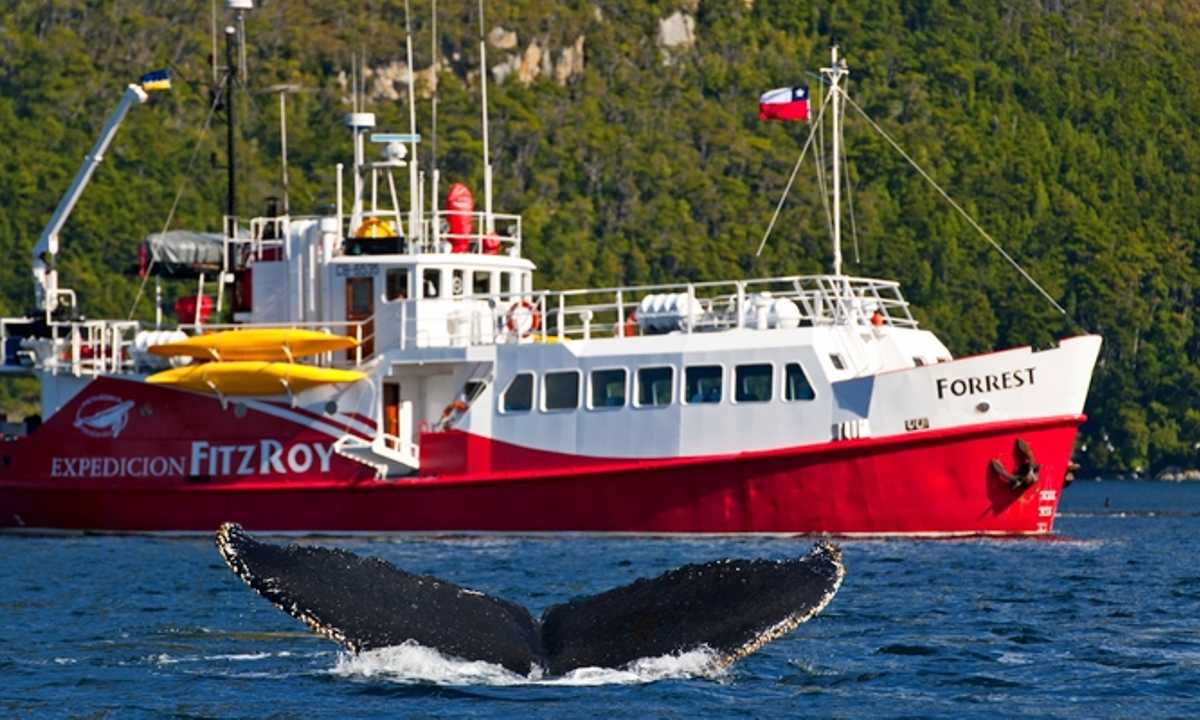 Vessel&Whale-EX-FR