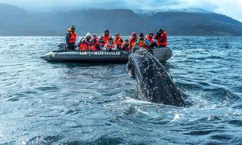 Adventure Cruises in Patagonia