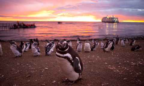 Patagonia Penguins
