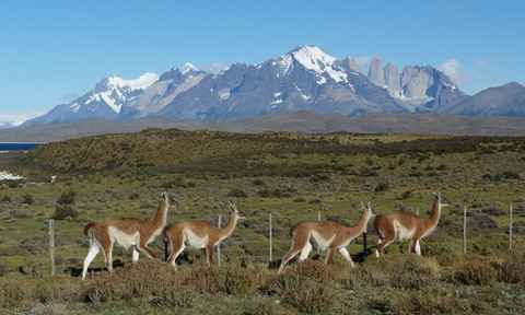 Trekking South Patagonian Andes