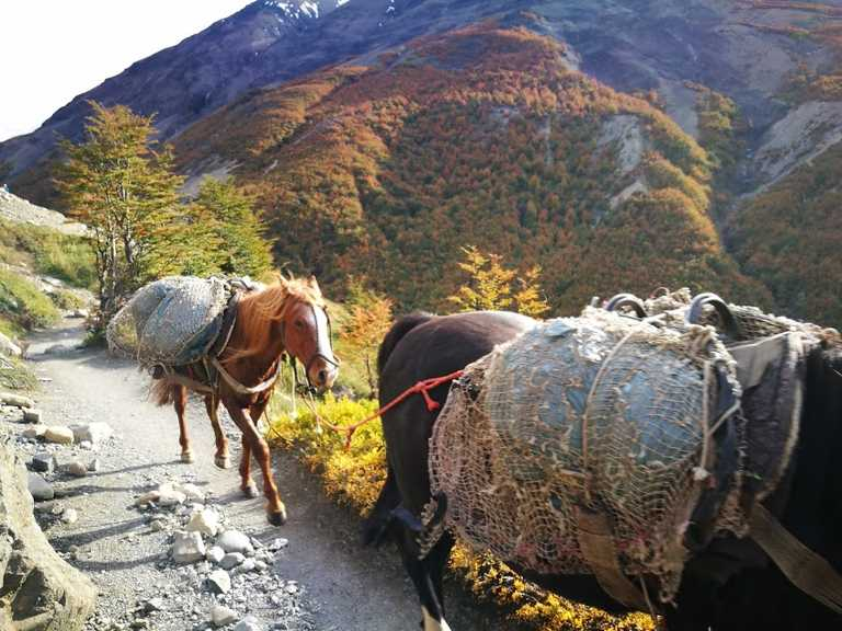 Horses carrying gear on the W Trek