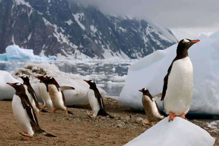 Antarctica-Penguins-Small-AXXI-p-p