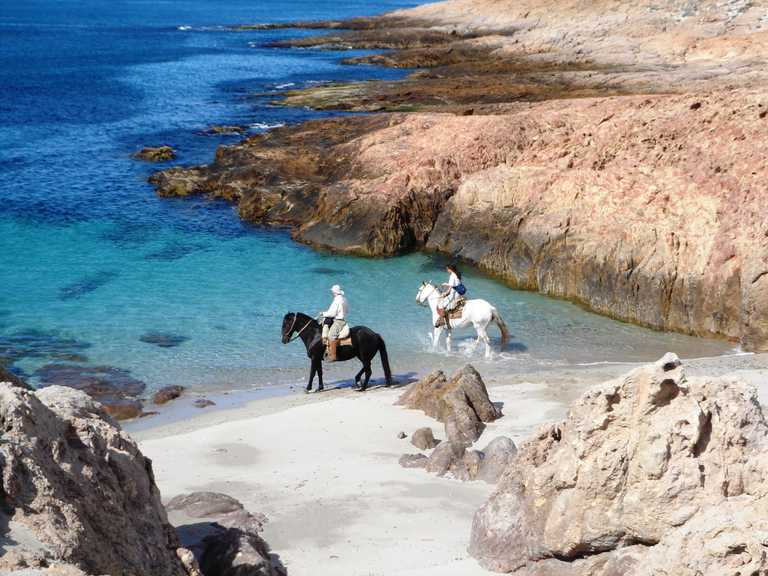 BAH_3_BAH_RTD_SEA-HORSE