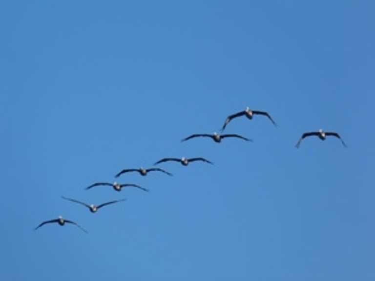 Birds in Chiloe - Small - SD - p-p