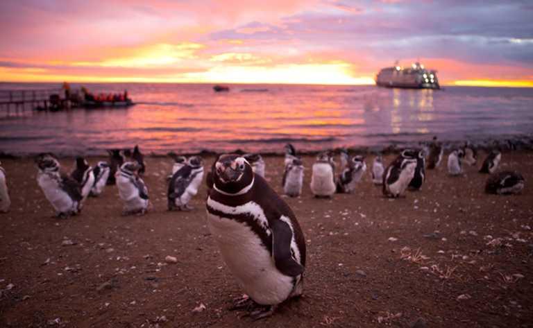 Penguins Patagonia - CRUC p-p