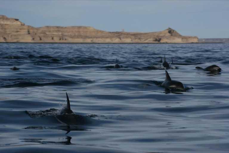 DolphinsValdes-HT
