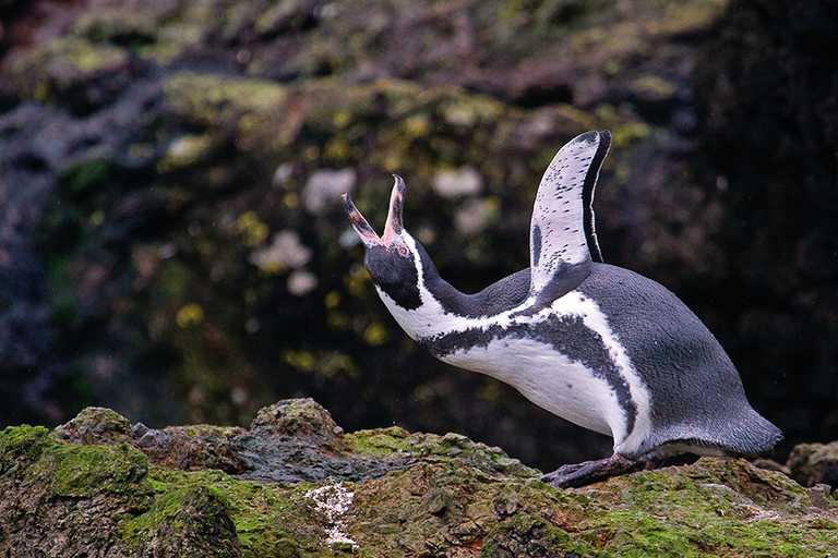 FSE_5_FSE_ALL_HUMBOLDTPENGUINS