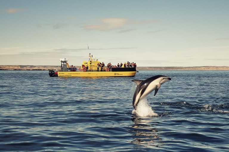 ELPEDRAL-orca