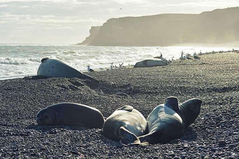 ELPEDRAL-seals
