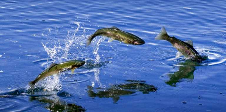 HeaderImage-Fishing
