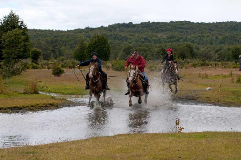 Horses-EMCD