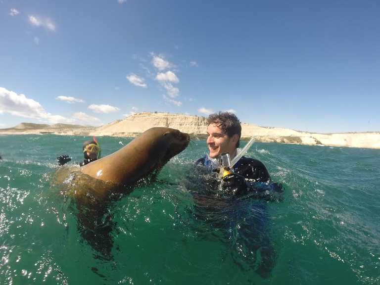 Valdes sea lion