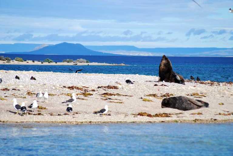Sea Lions in Valdes - SWX p-p