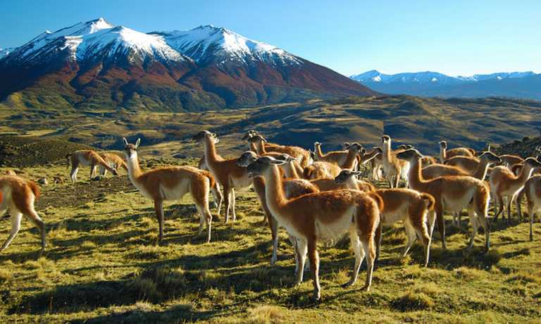 Safari in Southern Patagonia