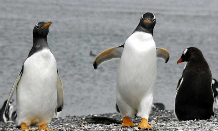 Martillo Island Penguin Walk