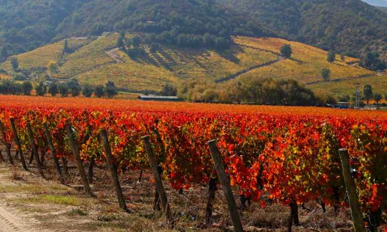 The Best of Chile's Wine Country