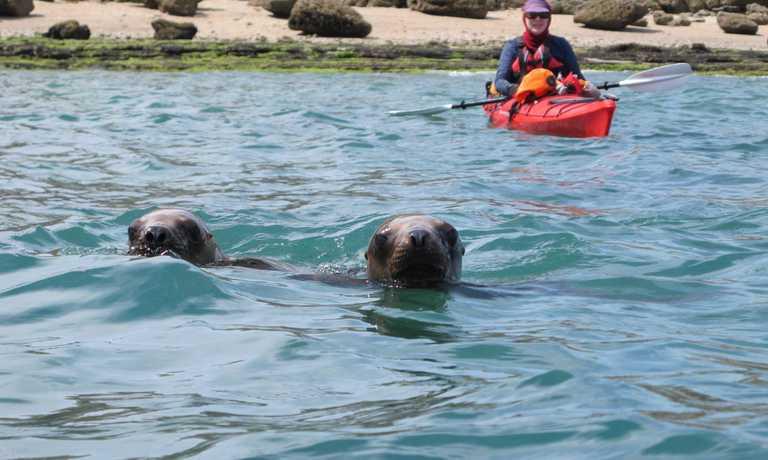 3 day Valdes Wildlife Kayak