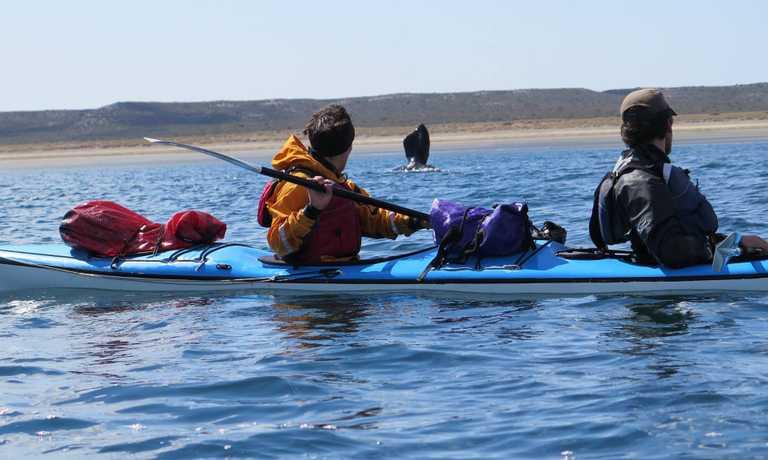 Peninsula Valdes Sea Kayak Safari